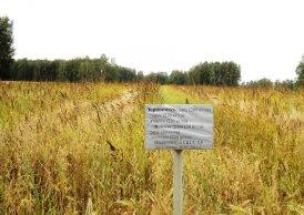 Пригородное посевы кормосмеси