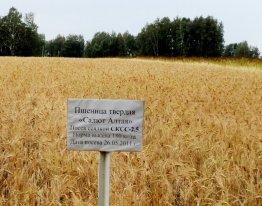Пригородное пшеница 180кг